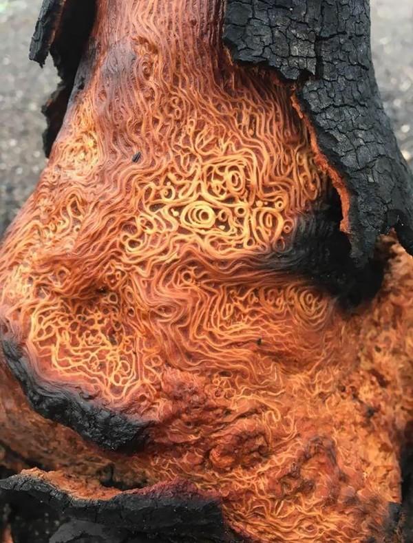 Akar pohon yang terlihat seperti spageti dilumuri saus tomat. Nyam!