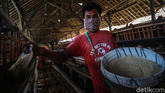 Menurut salah satu peternak ayam petelur di Blitar, Jawa Timur, ada jurus jitu menyiasati harga pakan yang kian naik-turun. Penasaran?