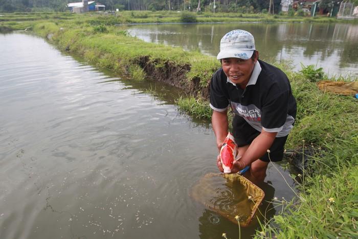 Pembudidaya Ikan Koi di Blitar