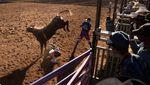 Potret Aksi Uji Nyali Koboi Rodeo