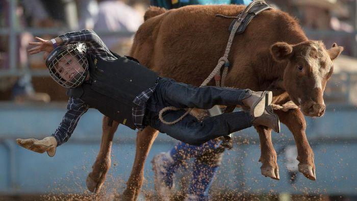 Potret Aksi Uji Nyali Cowboy Rodeo