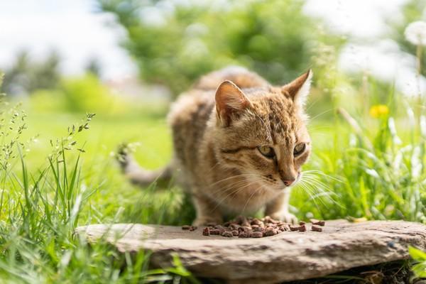 Kalau kucing meremas dengan cakar, berarti tanda dia bahagia. (iStock)