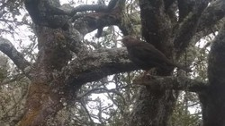 8 Fakta dan 4 Mitos Burung Jalak yang Tuntun Pendaki di Gunung Lawu