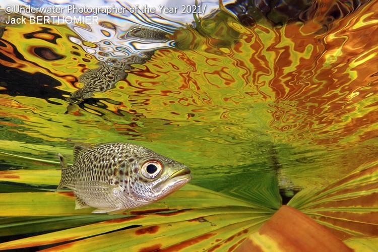 Underwater Photographer Of The Year 2021