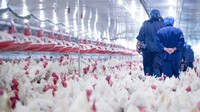 COVID-19 di China Ngamuk Lagi, Kasus Flu Burung Ikut Mengkhawatirkan