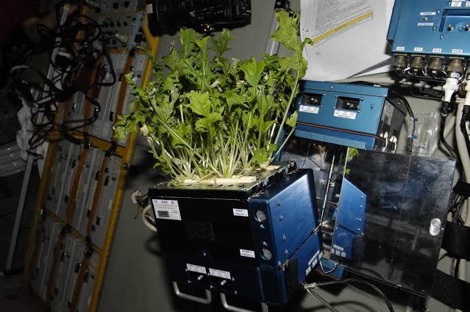 5 Sayuran yang Tumbuh Subur di Luar Angkasa, Selada hingga Lobak