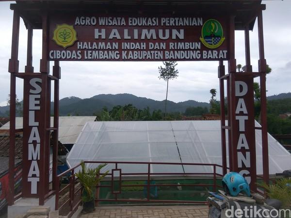 Pertanian yang digeluti perempuan tamatan SMA itu sebetulnya merupakan realisasi dari konsep agrowisata tanaman sayuran. Berlokasi di Desa Cibodas, Lembang, ia menyasar wisatawan yang berlibur ke Lembang.