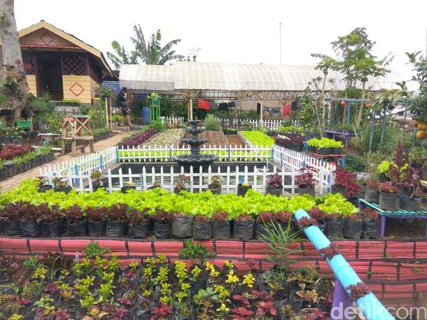 Agrowisata Halimun atau Halaman Indah dan Rimbun yang digelutinya sejak dibentuk pada 18 Februari 2013, sudah mampu menghidupi puluhan ibu rumah tangga. Kebanyakan melakoni peran ganda, yakni sebagai kepala keluarga.