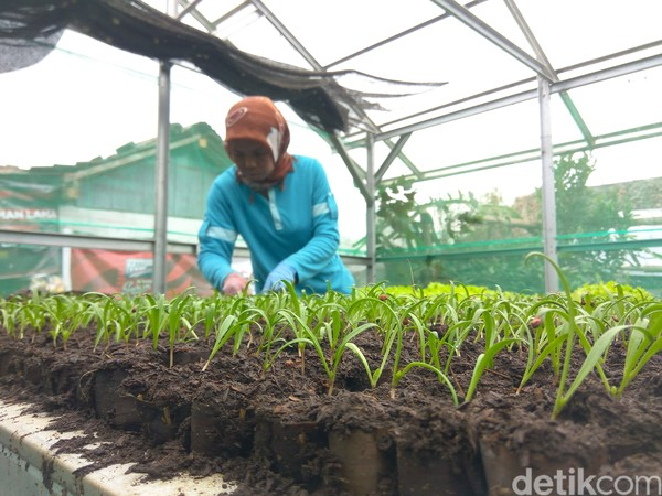 Semua sayuran yang ditanam di lahan Agrowisata Halimun Lembang dipasarkan melalui anggota kelompok yang memang fokus pada bidang pemasaran. Sektor pemasarannya pun sudah menembus ke pasar modern dan juga pasar tradisional di berbagai daerah.
