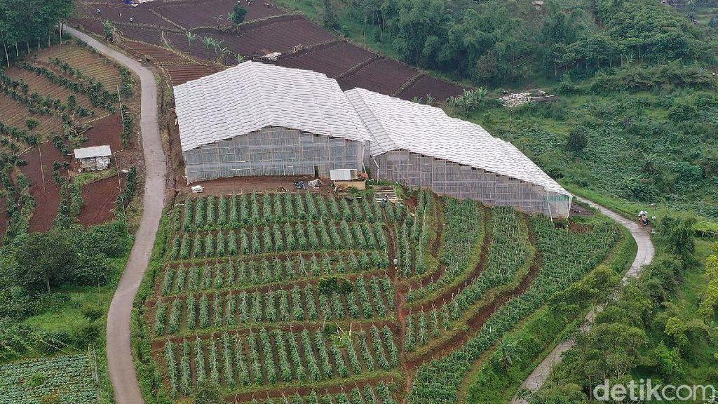 BRI Bangun Greenhouse Paprika untuk Petani Bandung