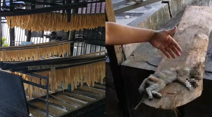 Jorok! Ada Bangkai Kucing dan Sarang Lalat di Pabrik Kembang Tahu Ini