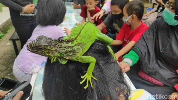 Selain ajang silaturahmi, kontes reptil itu sengaja digelar juga sebagai ajang edukasi ke sesama pecinta reptil. Bagi para peserta, kontes ini dimanfaatkan untuk saling berbagi ilmu dalam merawat reptil. (Moehammad Bakrie/detikTravel)