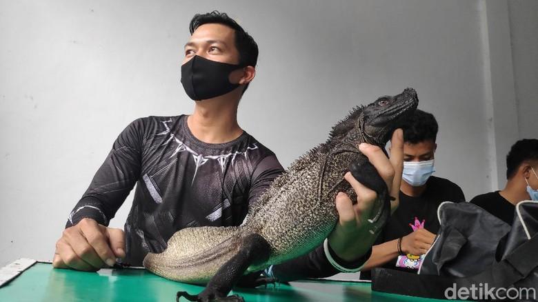 Kontes hewan reptil di Maros