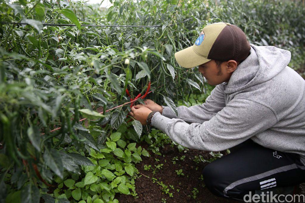 Banyak anak muda yang menganggap jadi petani itu kotor dan kurang menghasilkan. Hal itu ditepis Dede Koswara (32), petani muda Bandung dengan omzet puluhan juta.
