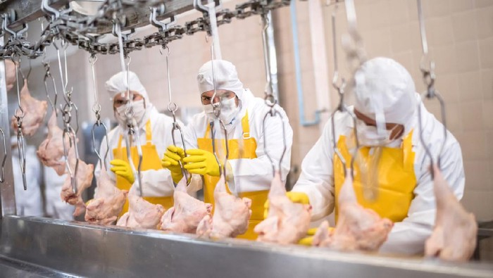 Group of people working at a chicken factory doing quality control