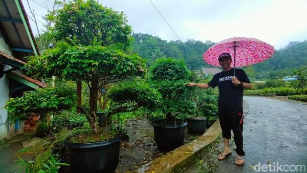 Rata-rata sebagian besar warga di Desa Teja bekerja sebagai petani bibit tanaman. Apabila tengah berkunjung ke Majalengka, mungkin bisa sekalian mampir ke Kebun Anggur Brasil ini.