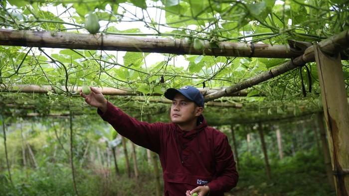 Petani Muda di Bandung Beromzet Puluhan Juta dari Jual Sayuran