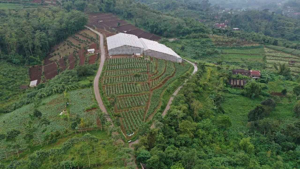 Area perkebunan labu acar di Kabupaten Bandung