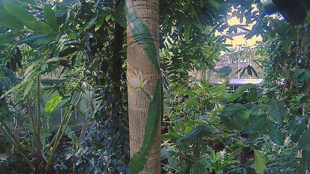 Kaktus Langka Amazon Berbunga