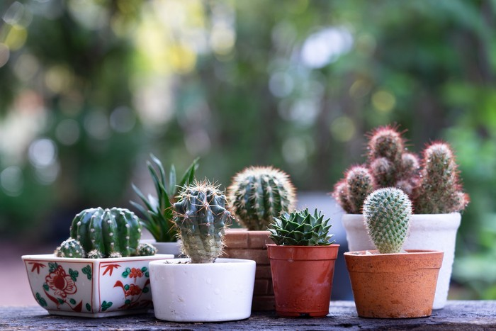 Morning outdoor activity to watering cactus pot plant, copy space