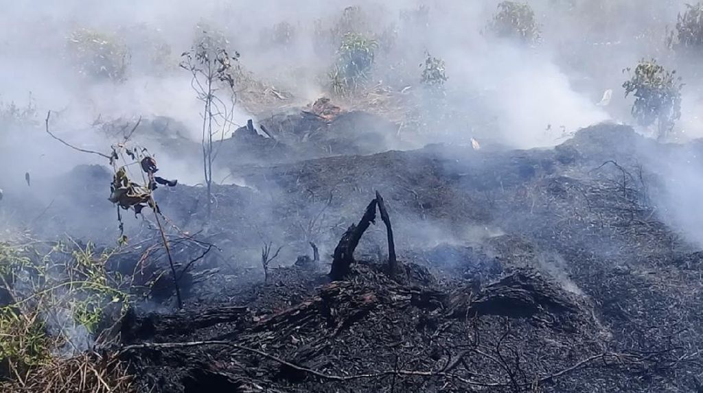 Sudah 10 Hari, Kebakaran Lahan Gambut di Sumbar Belum Padam