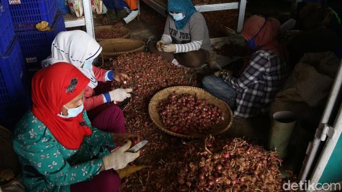Gapoktan Regge, Cukanggenteng, Pasir Jambu, Bandung, Jawa Barat memberdayakan pekerja untuk proses pengupasan bibit bawang merah.