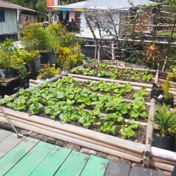 Penduduknya menanam sayur di halaman rumah. (Hari Suroto)