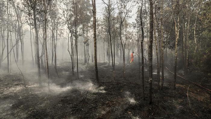 Petugas Penanggulangan Bahaya Kebakaran (PBK) Badan Pengusahaan (BP) Batam berusaha memadamkan areal hutan terbakar di wilayah Keselamatan Operasi Penerbangan (KKOP) Bandara Hang Nadim, Batam, Kepulauan Riau (Kepri), Senin (22/2/2021). Kebakaran hutan dan semak belukar di area Line Side (Sisi Darat) bandara diduga disebabkan oleh cuaca panas dan angin kencang. ANTARAFOTO/Teguh Prihatna/rwa.