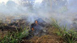BMKG Deteksi 8 Titik Panas di Riau, Tersebar di 3 Kabupaten