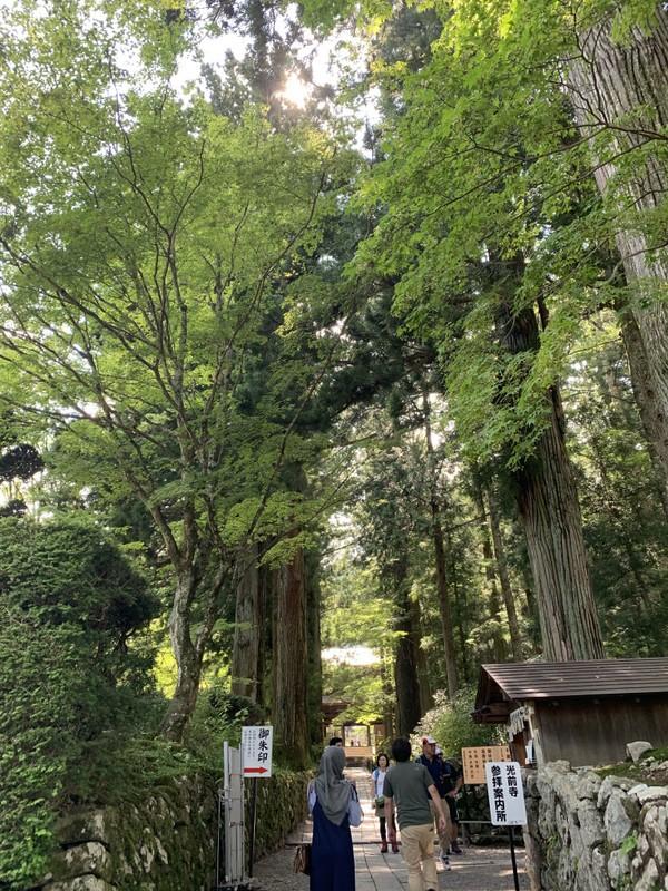 Perjalanan berlanjut dan akhirnya kita menemukan sebuah gerbang. Traveler pasti merasa takjub dengan pohon-pohon yang menjulang tinggi dan berjajar rapi seolah menyambut siapapun yang berkunjung ke sana.