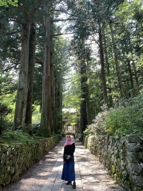 Jalan setapak di bawah ini yang jadi spot foto para wisatawan.Hijau asri teduh saat di sanadan pepohonan itu bak pagar-pagar halaman.