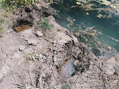 Lahan perkebunan dan sawah warga di Musi Banyuasin rusak setelah masuknya kawanan gajah liar (dok Polres Musi Banyuasin)