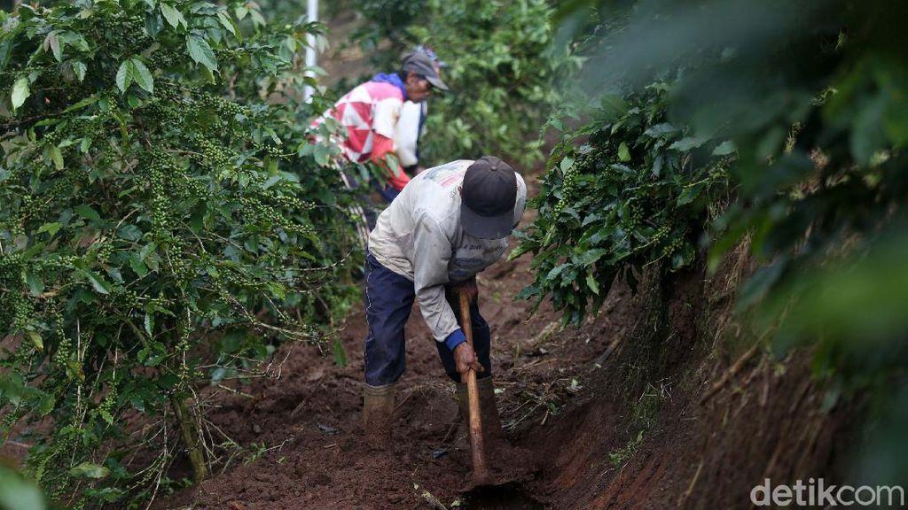 Melihat Petani Menyiapkan Lahan untuk Tanam Bawang Merah