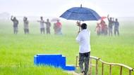 Cerita di Balik Jokowi Jalan Sendiri Susuri Sawah Saat Hujan di NTT