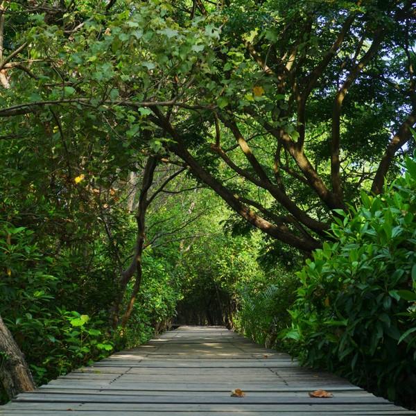 Kota Pahlawan juga menyimpan wisata alam yang patut kamu kunjungi saat staycation. Mangrove Gunung Anyar salah satunya.