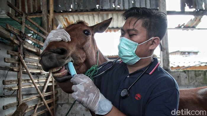 Dinas KPKP Jakarta dan Kementerian Pertanian dan gabungan perhimpunan dokter menggelar pelayanan kesehatan pada kuda wisata atau delman di Jakut.
