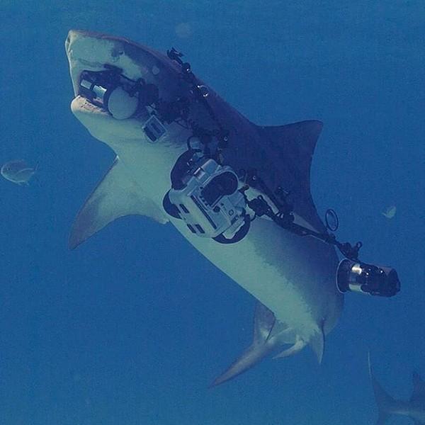 Apa yang kamu lakukan saat hiu membawa kabur kamera kamu?