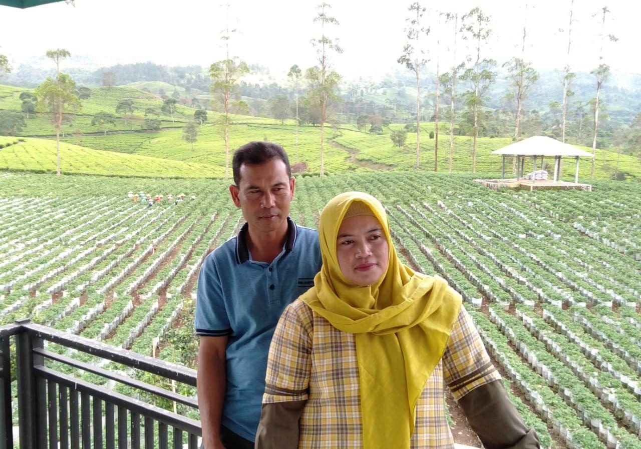 Petani Strawberry Bandung - BRI