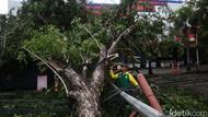 Akibat Hujan dan Angin Kencang 7 Pohon Tumbang di Kota Bekasi