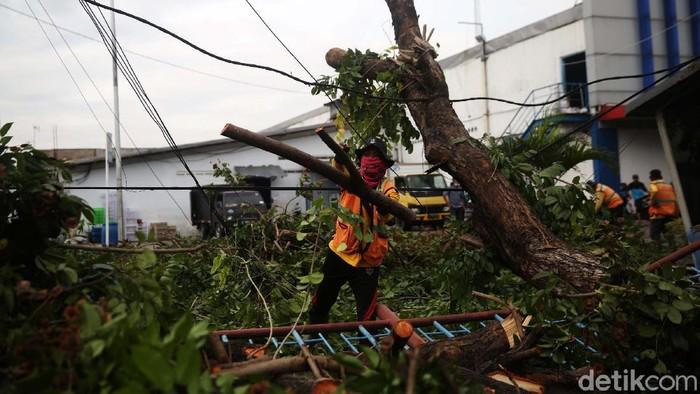 Sedikitnya ada 7 pohon yang tumbang di Bekasi akibat hujan dan angin kencang semalam. Salah satunya di Jl. Raya Perjuangan, Kecamatan Bekasi Utara, Kota Bekasi.