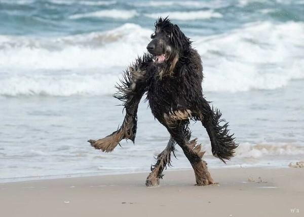 Saat bulunya basah akibat bermain di pantai. Aduh, pasti ribet nanti membersihkan dari pasir dan air laut.
