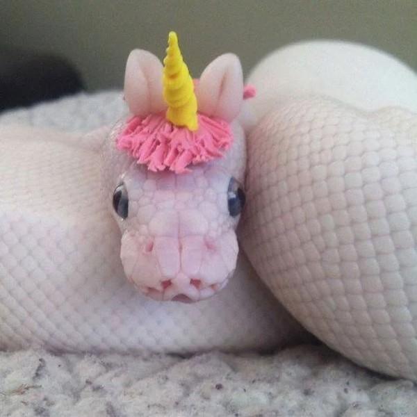 Uni-snake, gimana?