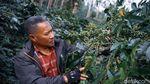Mengenal H Nuri Pendiri Kopi Malabar Indonesia