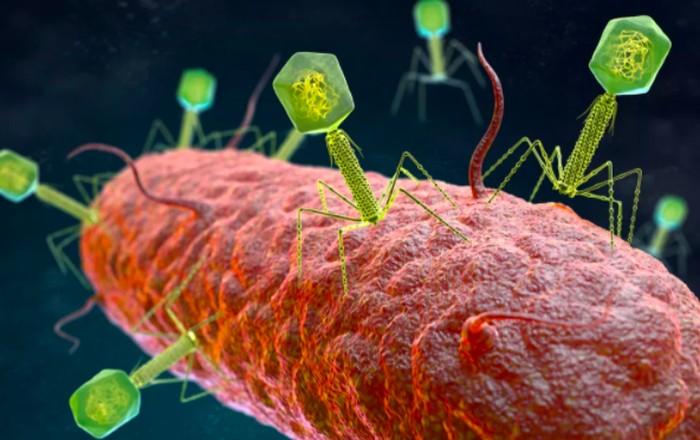Bakteriofag adalah virus yang menginfeksi bakteri.