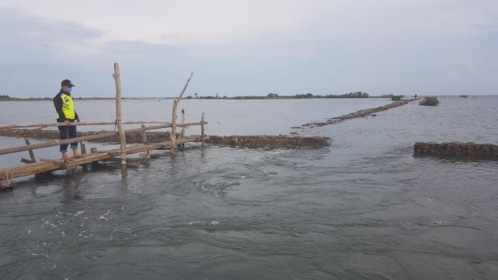 Bhabinkamtibmas pantau pematang tambak yang ikut jebol imbasnya jebolnya tanggul pantai hingga tenggelamkan 20 hektare tambak. (Abdy Febriady/detikcom)