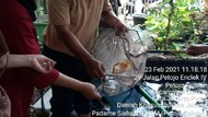 Ketahanan Pangan Budidaya Ikan Ala Kampung Tangguh Jaya di Jakpus