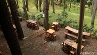 Ngopi Asyik di Tengah Hutan Pinus Bandung, Ini Tempatnya