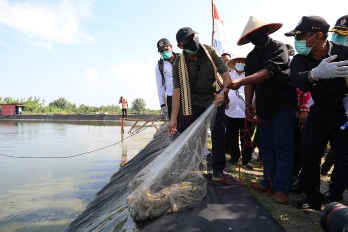 Menteri Koperasi dan UKM, Teten Masduki meninjau aktivitas tambah udang di Tulang Bawang, Lampung