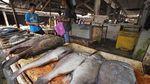 Konsumi Ikan Nasional Terus Meningkat