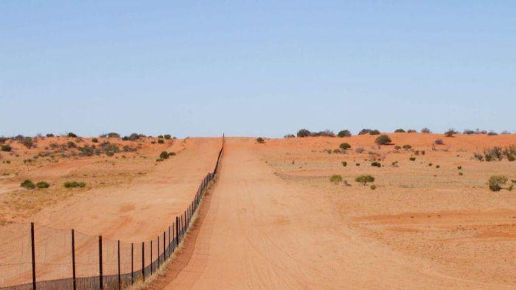 Tanpa Kehadiran Anjing Liar, Lahan Pertanian di Australia Lebih Tandus